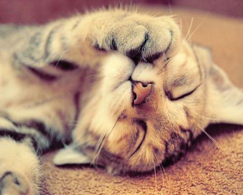 gato de bengala2.jpg