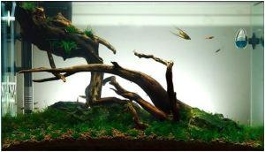 aquario 1.jpg
