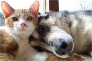 cao e gato.jpg