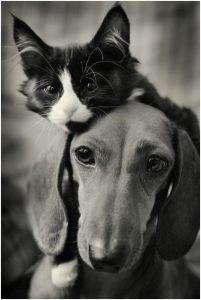 cao e gato 2.jpg