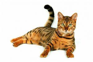 gatos2.jpg