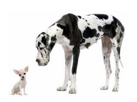 Cachorro pequeno e grande