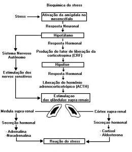 Bioquimica Stress